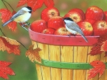 Apples with Chickadees