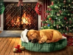 My Christmas Wishes - Dog