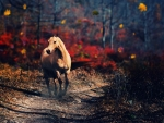 horse in the wood