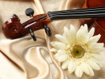 FLOWER AND VIOLIN