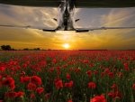 Spitfire and Poppies