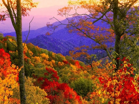 Smoky Mountains at Fall - colors, leaves, autumn, landscape, trees