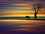 Horse grazing at sunrise