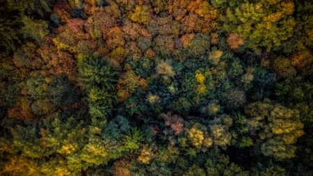 autumn forest - top, forest, tree, autumn