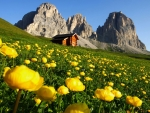 Dolomite Pale Mountains,Italy