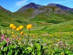 Mountain Meadow with Flowers