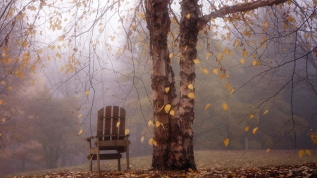 under the tree - chair, autumn, nature, leaf