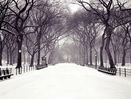 Hazy Shade Of Winter - snowfall, trees, haze, benches, snow, black and white, lanterns, winter