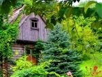 A House among Greenery