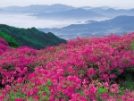 Bright Pink Flowers in the Mountains