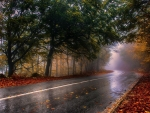 Autumn rain Road