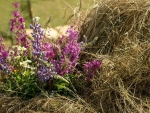Hay of flowers