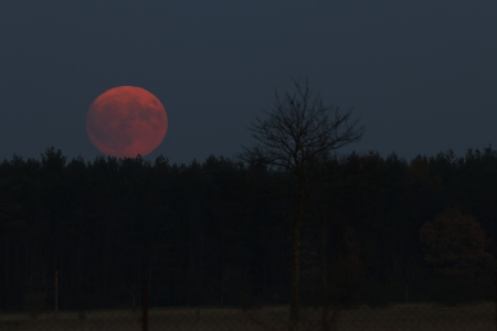 red moon rising - moon, space, rise, night