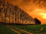Bare Trees Field at Sunset