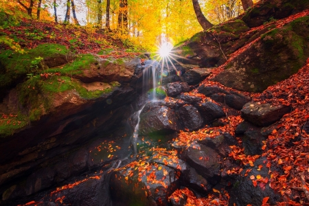 Rocky Sunlit Stream in Autumn - Autumn, Nature, Rocks, Moss, Forests, Leaves, Streams, Sunshine, Fall