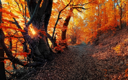 Path in autumn forest - autumn, sunrays, forest, path, trees, branches, foliage, walk, sunlight, beautiful