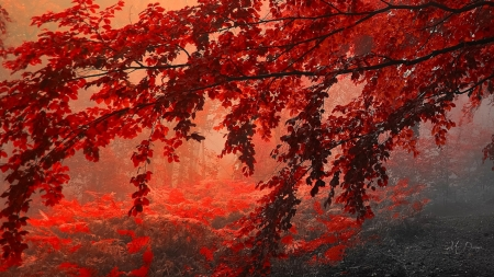 Bright Leaves - autumn, fall, trees, leaves, sunset, maple, woods, forest, Firefox Persona theme, sunrise, bright, grove