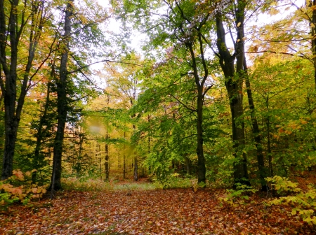 Fall Forest - Nature, Leaves, Forest, Fall, Photography