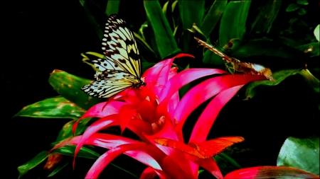LILIES - NATURE, BUTTERFLY, LEAVES, PETTALS