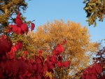 Autumn's Primary Colors III