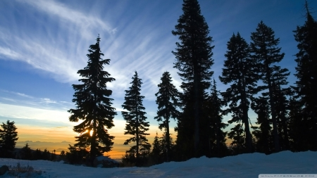 November Sky,Mount Seymour,British Columbia - sky, mountain, trees, nature, sunset
