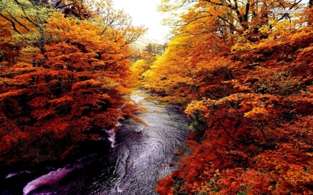 Autumn Rushing River - river, trees, autumn, nature, forest