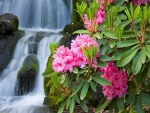 Waterfall with Pink Flowers