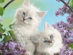 Two White Kittens with Blue Eyes