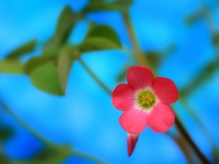 PRETTY FLOWER - FLOWERS, IMAGE, PINK, PRETTY