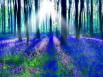 Sun Through The Bluebell Forest