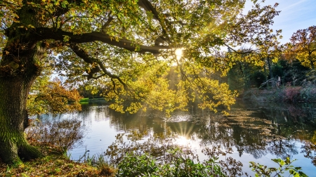 Autumn Lake - lake, leaves, autumn, sunrays, fall, nature, trees, reflection