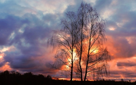November Sunset in Latvia - birches, Latvia, trees, clouds, sunset, sky