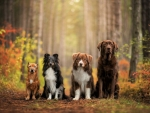 Dogs in Autumn Forest
