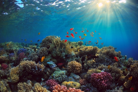Underwater Corals and Sealife - Fish, Coral Reefs, Nature, Oceans, Sea