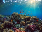 Underwater Corals and Sealife