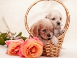 Puppies on Basket
