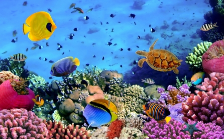 Healthy coral reef - corals, ocean, ecosystems, reef, pretty, healthy, fish
