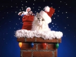 Kitty Going Down The Chimney