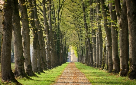 Tree Alley - avenue, road, trees, tree alley