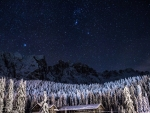 Starry-Winter-Night
