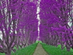Green Path Purple Trees