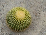 SPIKY CACTUS BALL