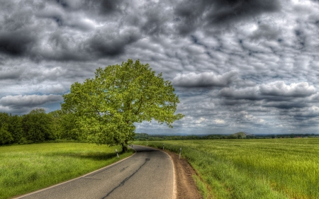 Country Road - clouds, tree, road, country