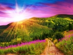 Mountains with Pink Flowers Sunset