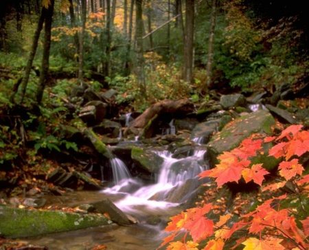 Autumn Stream - leaves, autumn, nature, waterfall, rocks, trees