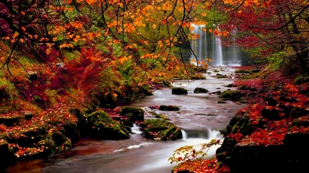 Waterfall in Autumn - Autumn, vibrant, beauty, waterfall, creek, Fall, nature, water