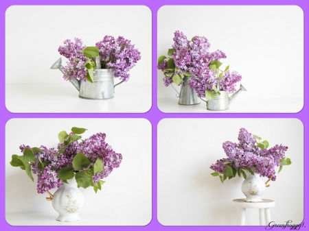FOUR IMAGES OF LILACS - LILACS, IMAGE, COLLAGE, FOUR