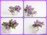 FOUR IMAGES OF LILACS