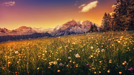 Beautiful Sunset - sunset, mountain, flowers, nature