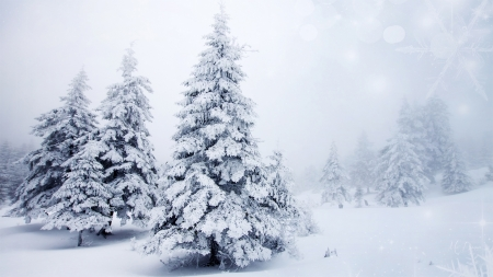 Looks Like Christmas - winter, snow, trees, Christmas, holiday, forest